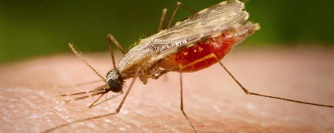 Solusi Terbaik Mengobati Penyakit Malaria